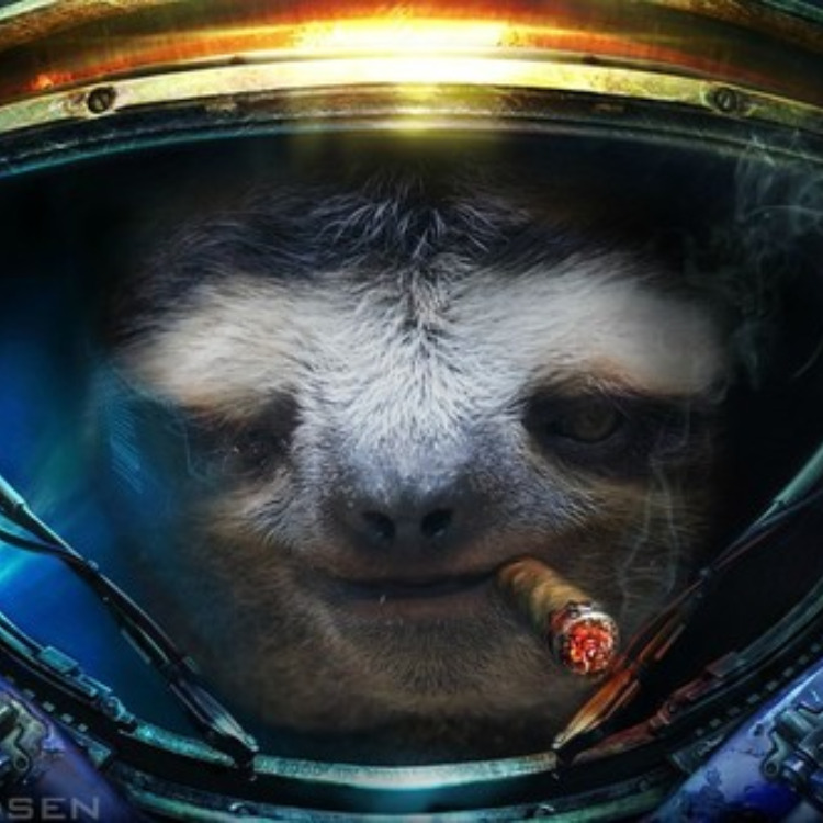 The awesome sloth