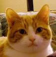 Le Chat Gilles