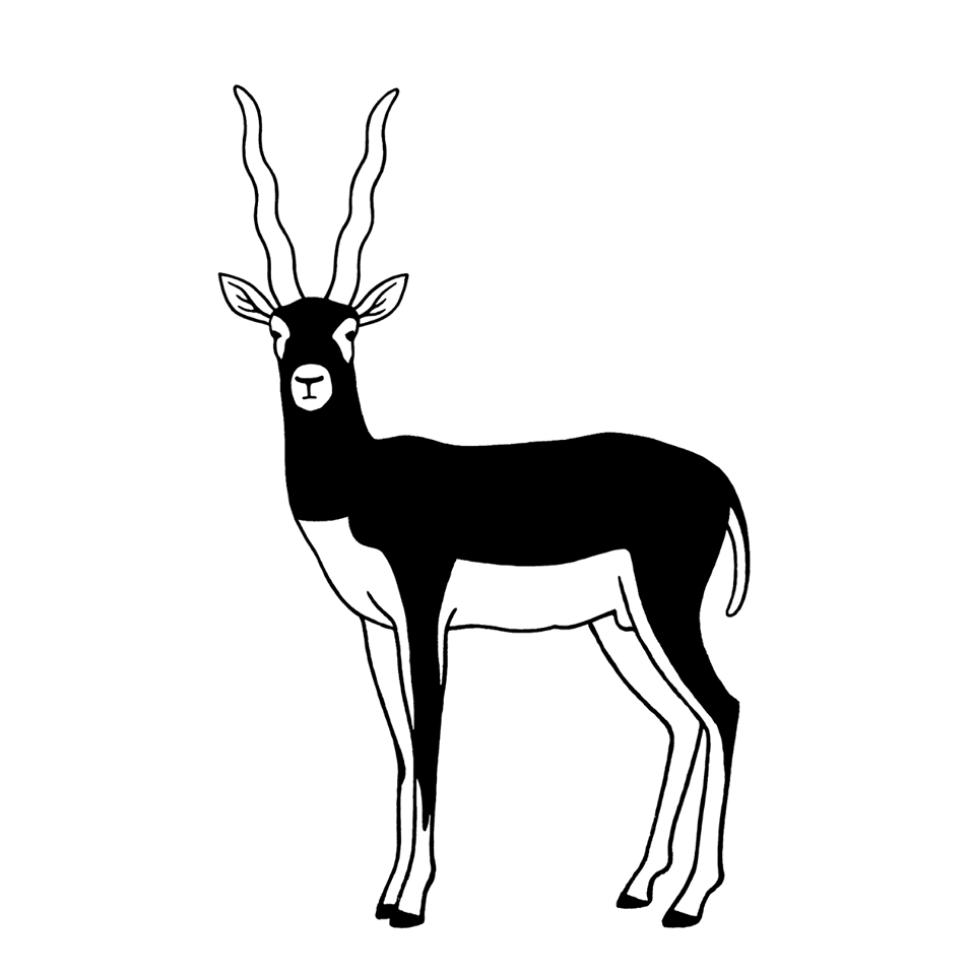Collectif Antilope
