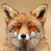 unnamedFox