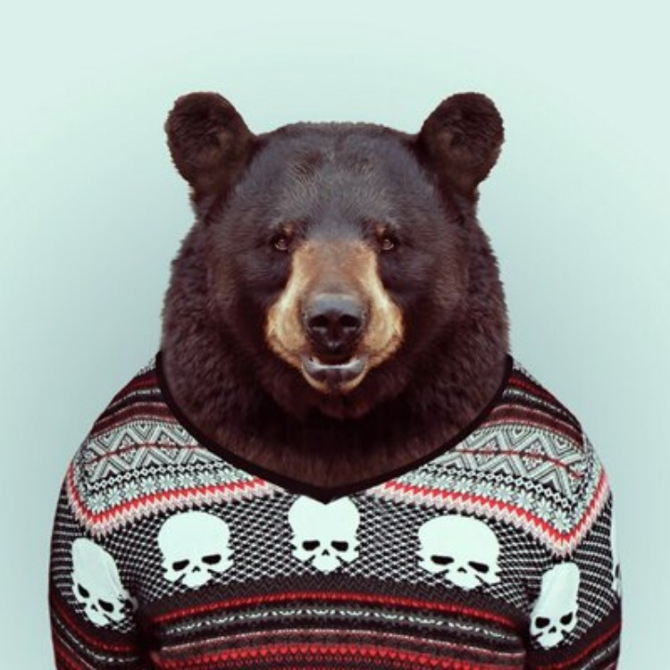 L'ours Martin