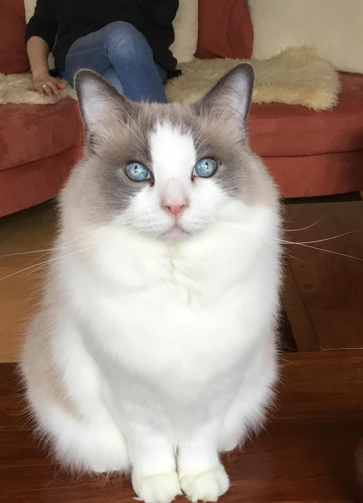 Kim_Floppycats
